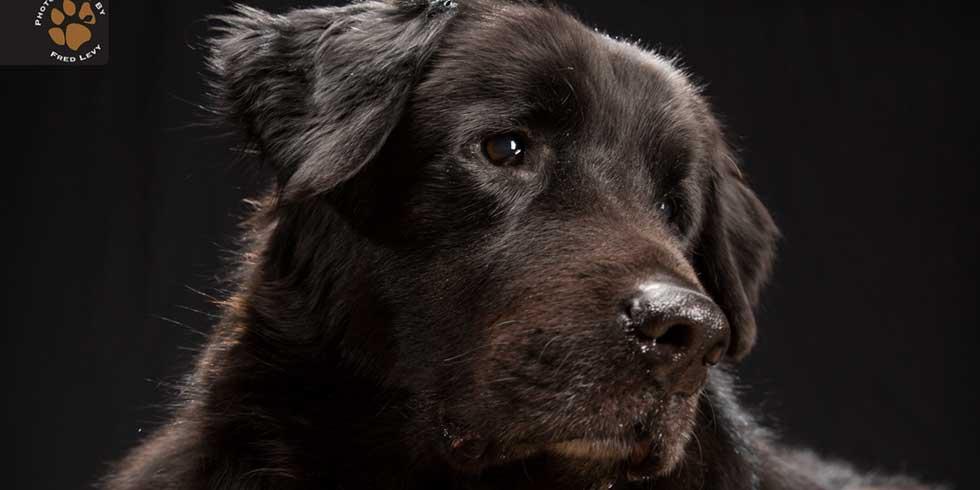 Síndrome do Cachorro Preto
