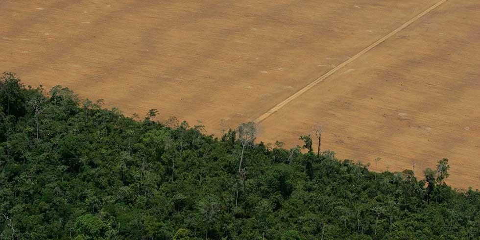 desmatamento na Amazônia Legal em 2014