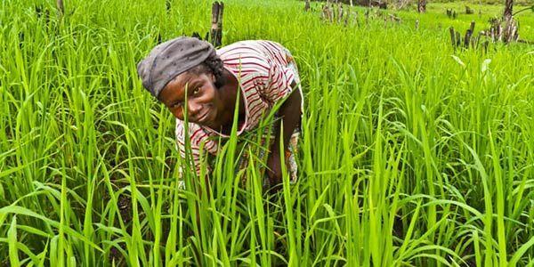 FAO homenageia países que se destacaram na luta contra a fome