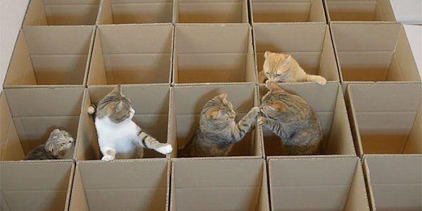 vídeo de 9 gatos em um labirinto feito de caixas