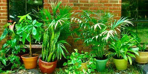 plantas toxicas animais