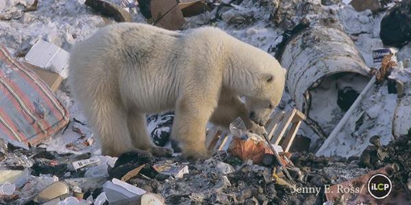 urso-no-lixo