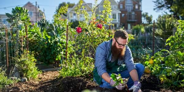 cultivar terra