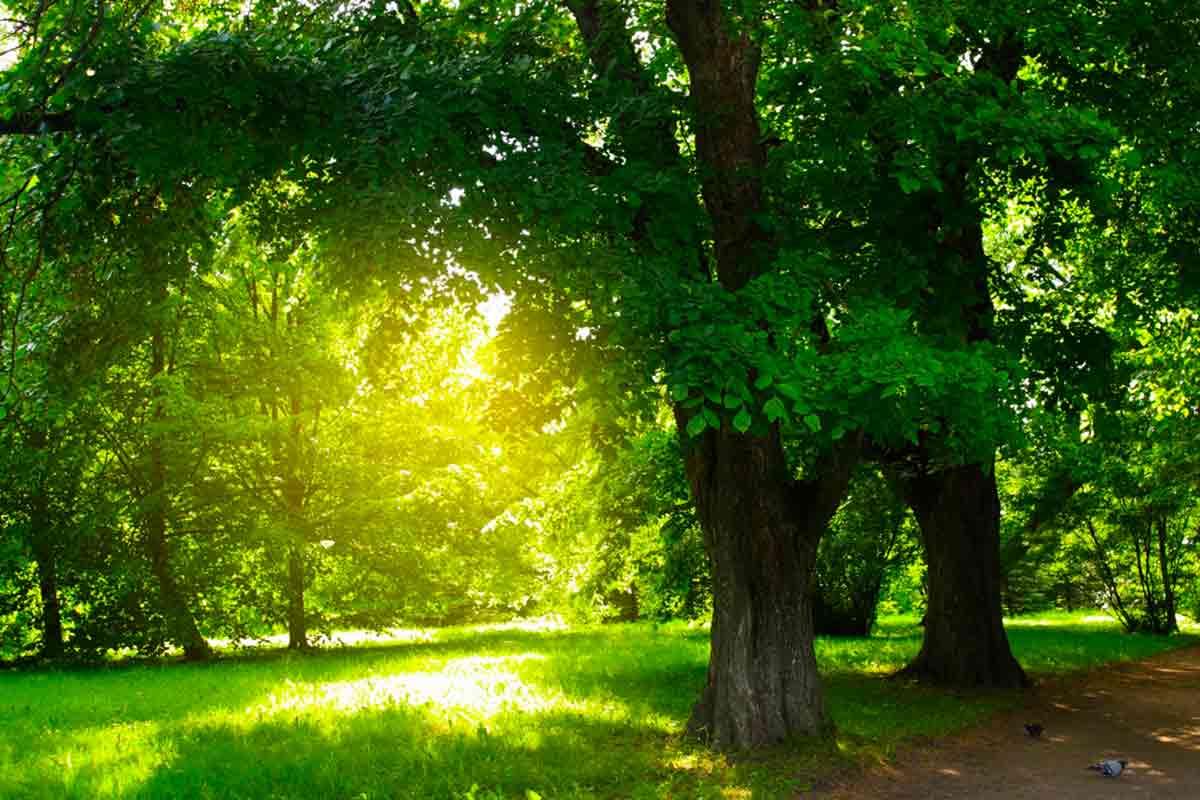 sombra das árvores