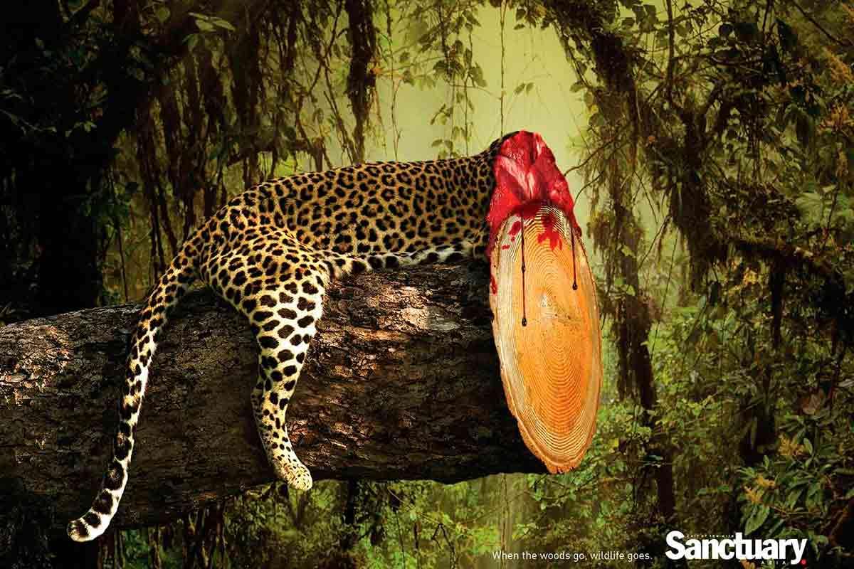 desmatamento animais