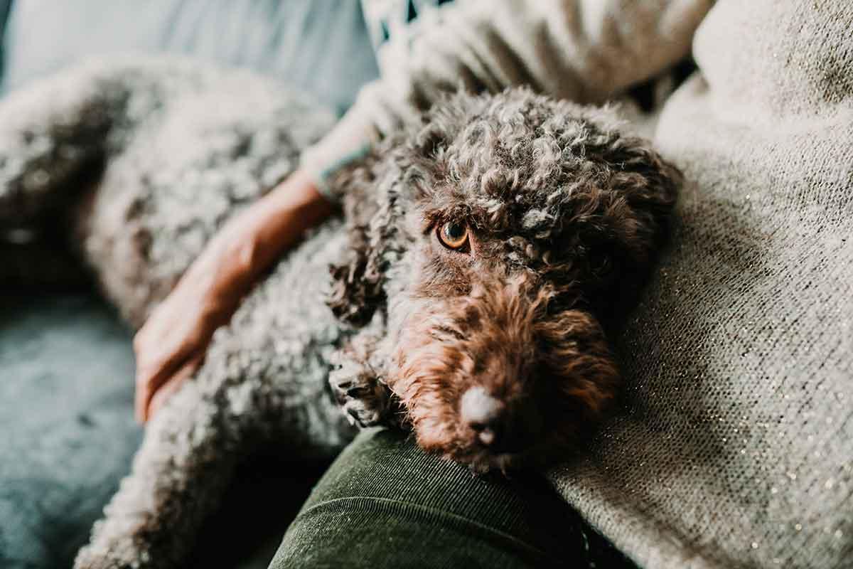 idade do cão